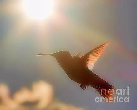 Dreamy Rainbow Hummer by Ramona Edwards