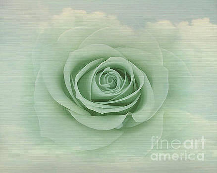 Dreamy Vintage Floating Rose by Judy Palkimas