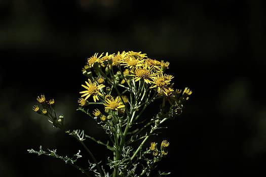 Dreamy Yellow by Bren Ryan