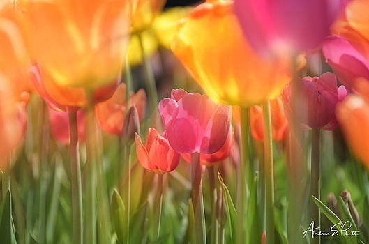 Drenched In Sunlight by Andrea Platt