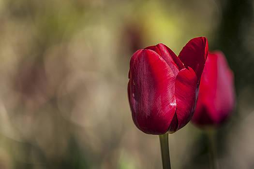 Dressed For Spring by Edward Kreis