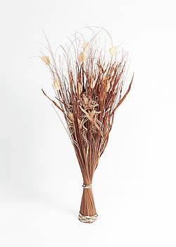 Dried Flowers by Nigel Jones