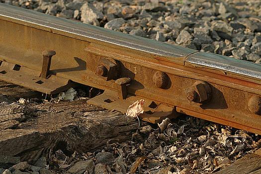 Steve Augustin - Dried leaf by Track