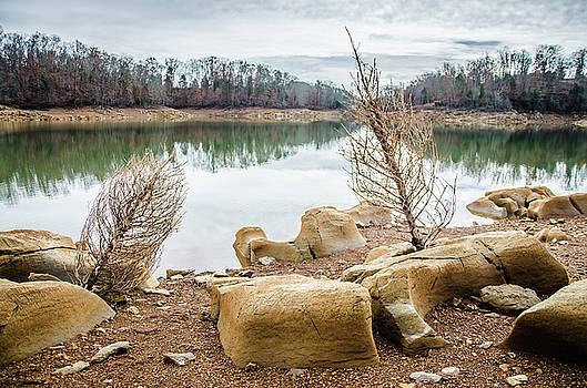 Dried Shrubs at Cherokee Reservoir by Ryan Ketterer