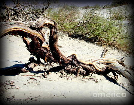 Drift Wood at Death Valley by Joy Patzner