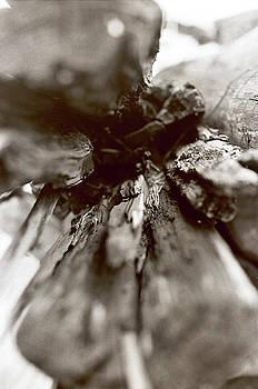 Drift Wood by Linnea Tober