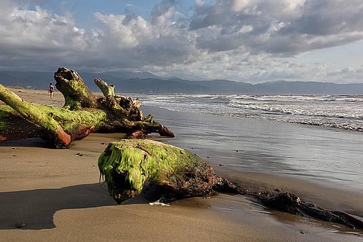 Reimar Gaertner - Driftwood and beachcomber on beach of Nuevo Vallarta Mexico