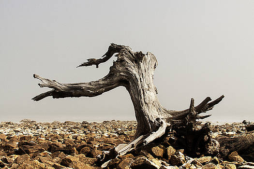 Driftwood and Fog by Jim Ziemer