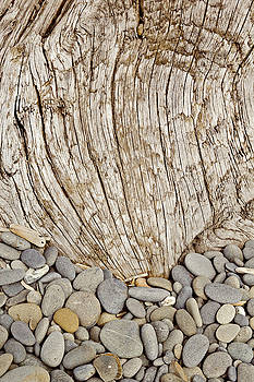 Driftwood and Rock Abstract Vertical by Peter J Sucy