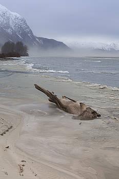 Driftwood Animal by Michele Cornelius