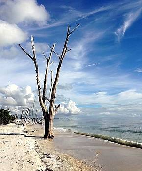 Driftwood at Lovers Key State Park by Janet King