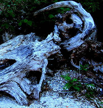 Driftwood Away by Patrick Mills