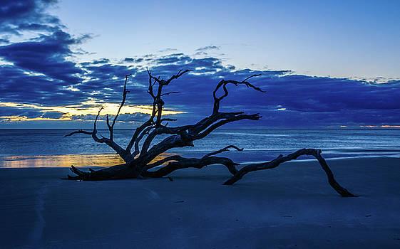 Andrew Wilson - Driftwood Beach Before Dawn
