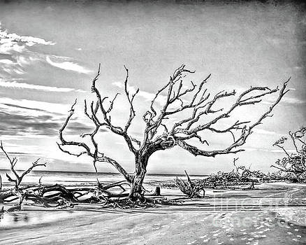 Driftwood Beach - Black and White by Kerri Farley