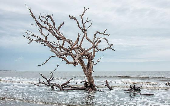 Andrew Wilson - Driftwood Beach Jekyll Island