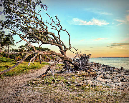 Driftwood Beach Morning 2 by Kerri Farley