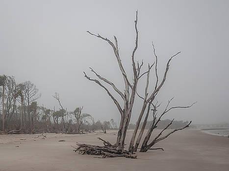Andrew Wilson - Driftwood Beach On Big Talbot Island