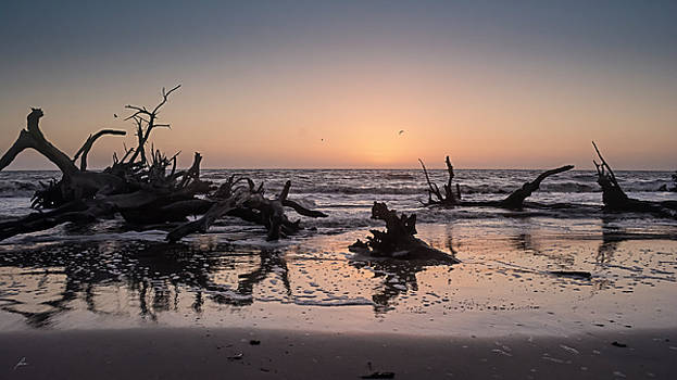 Driftwood Beach by Patricia Turo