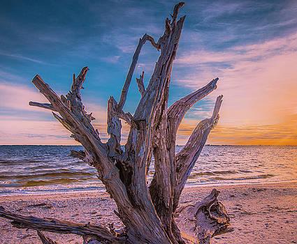 Driftwood Beach by Steven Ainsworth