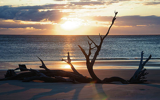 Andrew Wilson - Driftwood Beach Sunrise 2