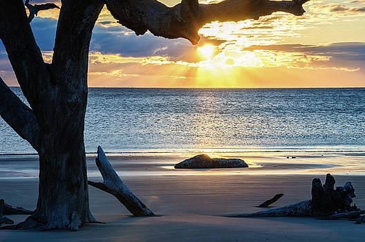Andrew Wilson - Driftwood Beach Sunrise
