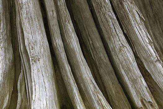 Driftwood by Bob Stevens