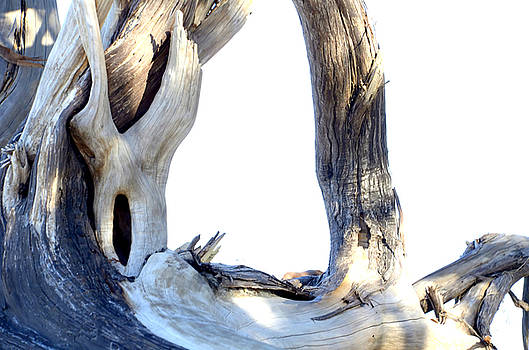 Driftwood by Charles Bacon Jr