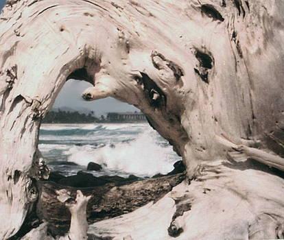 Diane Merkle - Driftwood