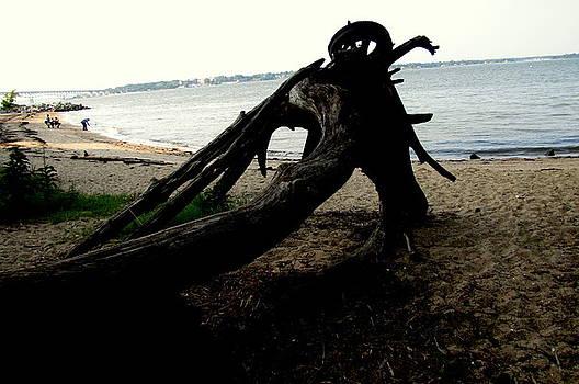 Driftwood Drifter by Patrick Mills