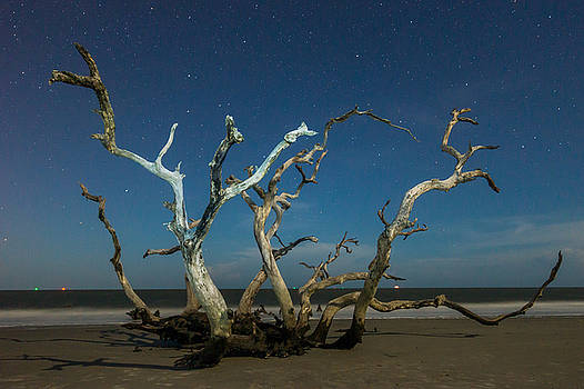 Chris Bordeleau - Driftwood Hydra Under stars