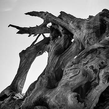 David Gordon - Driftwood I SQ BW