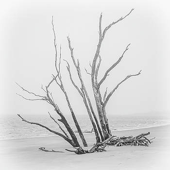 Andrew Wilson - Driftwood In Black And White