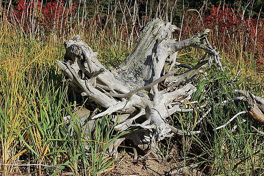 Driftwood in Grass by Kimberly VanNostrand