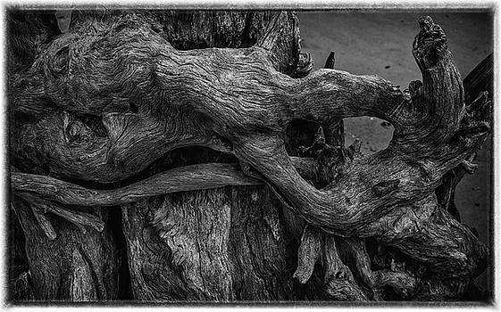 Andrew Wilson - Driftwood in Light and Shadow