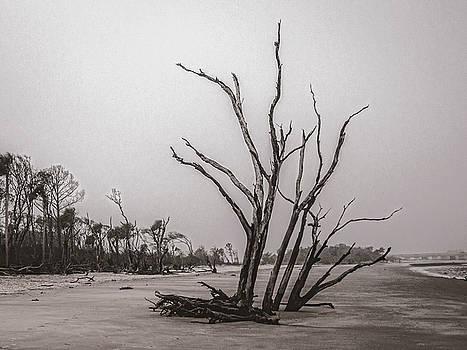 Andrew Wilson - Driftwood In Monochrome