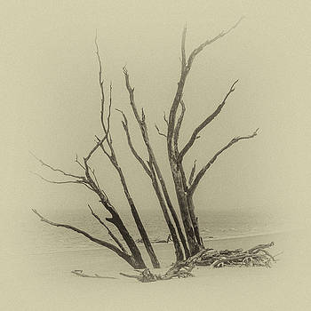 Andrew Wilson - Driftwood In Sepia