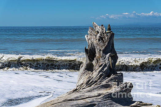 Driftwood in the Surf by Dave Matchett