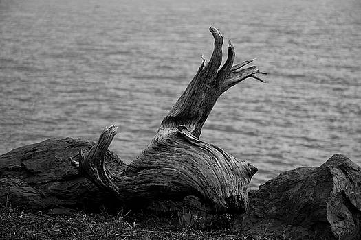 Driftwood by Jeff Severson
