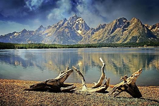 Marty Koch - Driftwood on Jackson Lake
