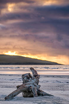 Driftwood on Luskentyre, Harris by Neil Alexander