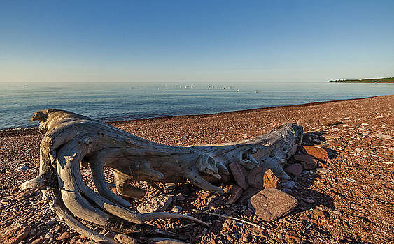 Driftwood On Shore by Lonnie Paulson
