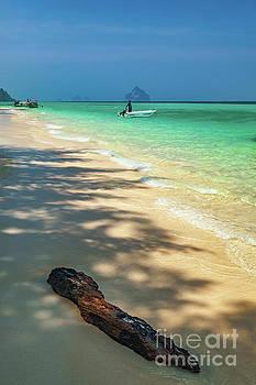 Adrian Evans - Driftwood On The Beach