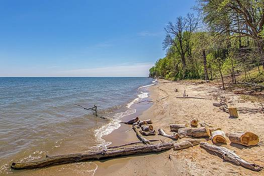 Driftwood on the Beach by Charles Kraus