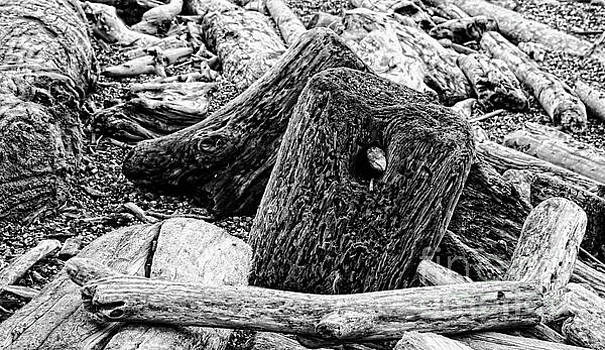 Driftwood Piled Up on Beach in Black White by Colin Cuthbert