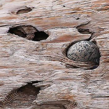 Art Block Collections - Driftwood Pocket
