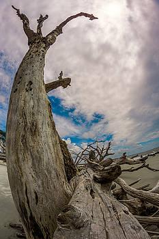Chris Bordeleau - Driftwood Reach