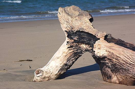 Driftwood by Scott Gould