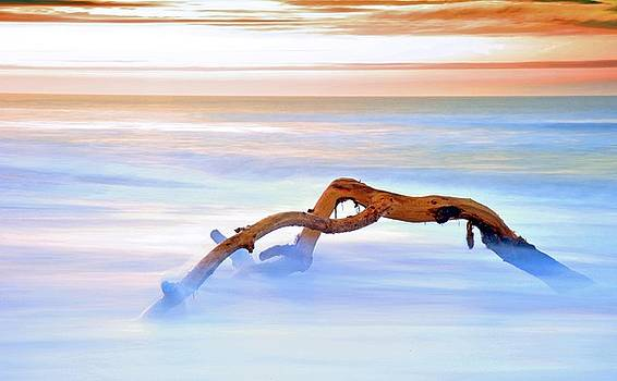 Driftwood by Spencer Brown