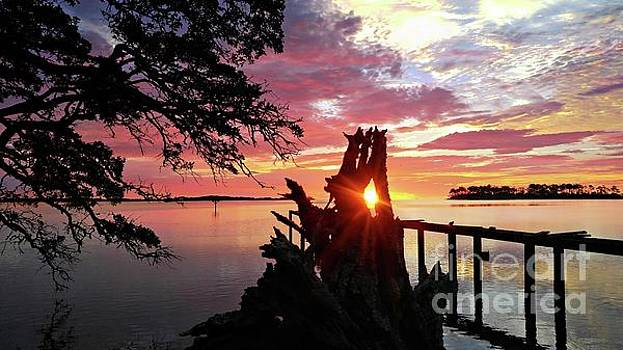 Driftwood Sunrise by Benanne Stiens and Jerry Stiens