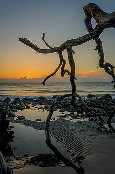 Driftwood Sunrise by Charlie Choc